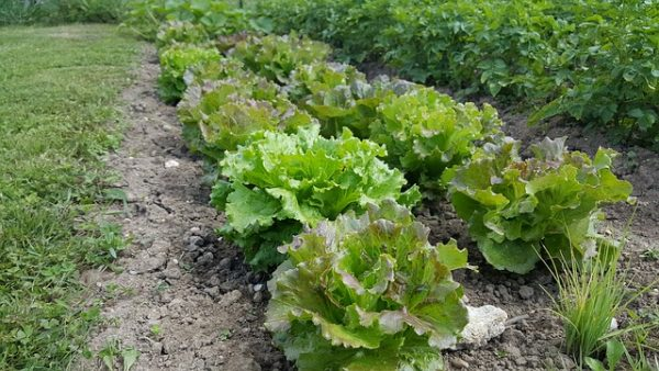 Como preparar o solo na agricultura orgânica?